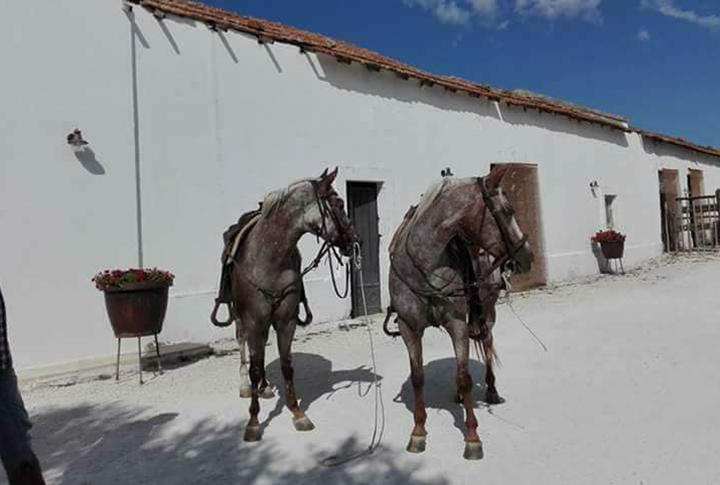 Escursioni a cavallo Masseria monache