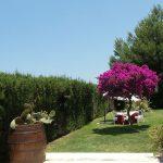 Particolare del giardino di Masseria Monache